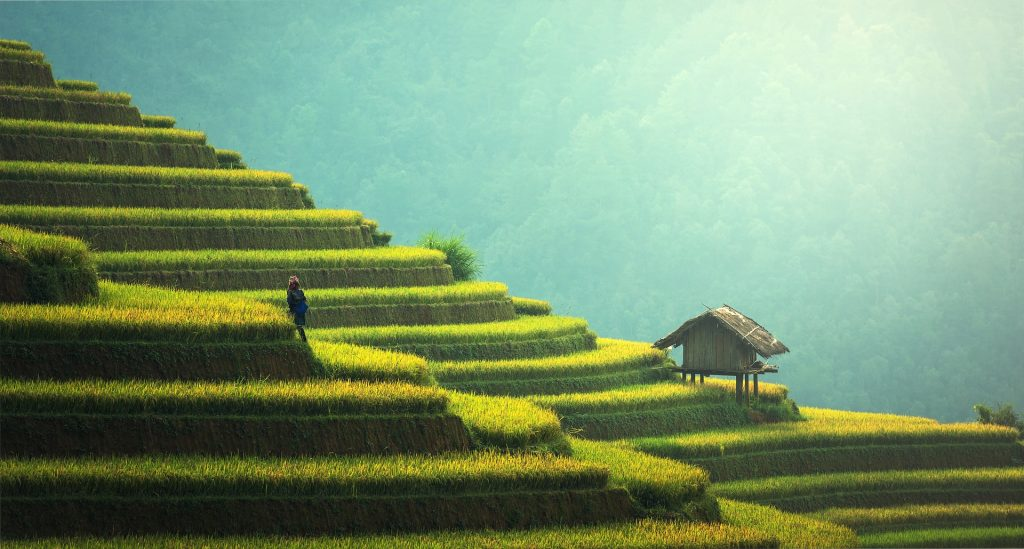 Green, terraced paddies with small, simple house
