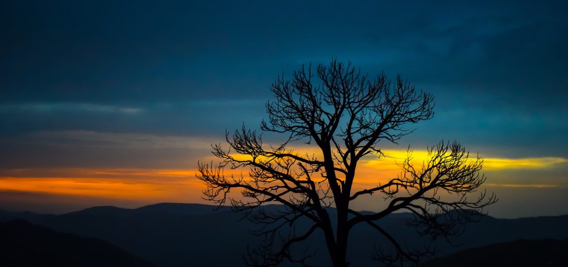 Leafless tree silhouetted against sunset clouds
