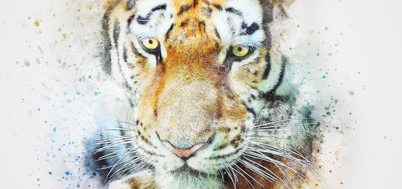 calm Bengal tiger face